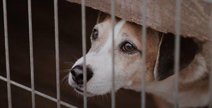 Fundación Affinity alerta: perros y gatos pasan una media de 8 meses 'confinados' en las protectoras esperando ser adoptados