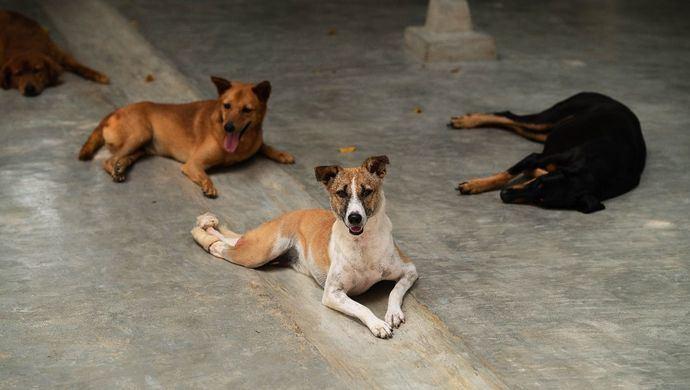 """#ElVeranoJuntos, la campaña solidaria que denuncia el abandono animal en la """"nueva normalidad"""""""