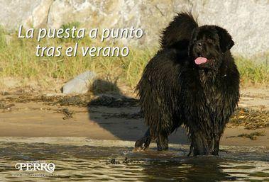 Foto Alberto Nevado - El Mundo del Perro.
