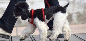 La Real Sociedad Canina aboga por un marco único estatal de Bienestar Animal que armonice toda la normativa autonómica