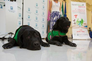 Acción de Tiendanimal Educa con la asistencia de un perro de terapia en un aula de alumnos con discapacidad en un colegio público de Jaén