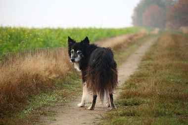 El perro geriátrico, reconocer algunos cambios que le afectarán