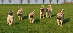 World Dog Show, la Exposición Mundial Canina, retrasa su celebración a 2022