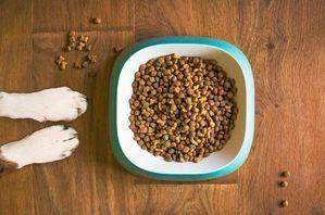 Comida para perros: ¿cómo darle la mejor alimentación a tu mascota?