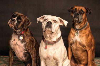 Perros felices: recomendaciones y servicios para cuidar de tu compañero