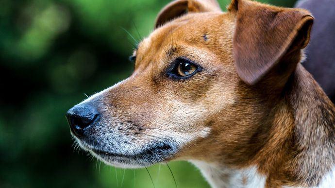 MSD Animal Health se une al Mes Mundial de la Diabetes para concienciar sobre la importancia de la detección temprana de esta enfermedad en mascotas
