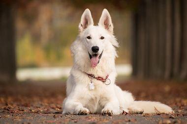 Cómo enseñarle a un perro su nombre