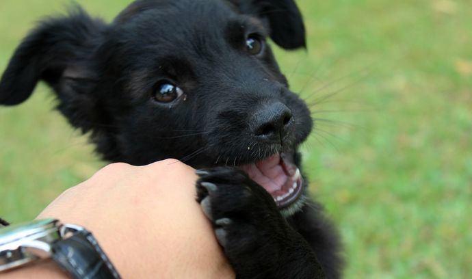 Atender la salud dental de nuestro cachorro, clave para evitar problemas orales a largo plazo