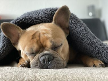 La importancia del sueño en nuestros perros y su calidad
