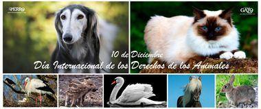 Día Internacional de los Derechos de los Animales, 10 de diciembre