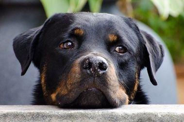 ¿Cuáles son los parásitos más frecuentes en perros?