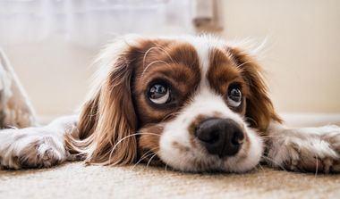 La veterinaria en pequeños animales: evolución histórica y principales retos en el siglo XXI
