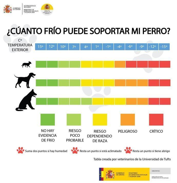 ¿Cuánto frío puede soportar vuestro perro?