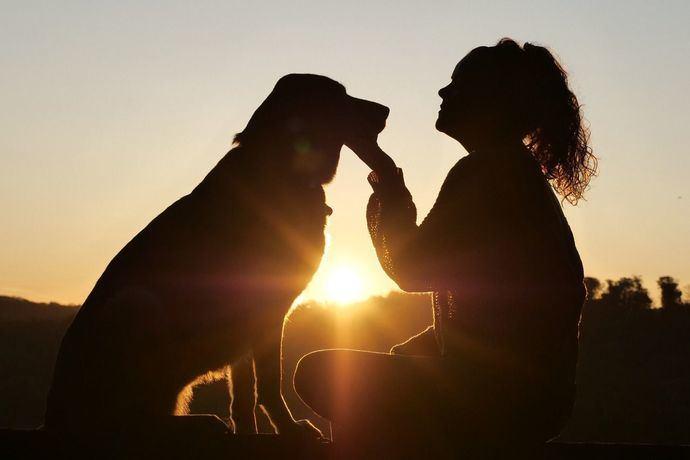¿Cómo alimentar a tu perro? Guía y consejos
