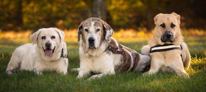 ¿Mito o realidad? Descubre 5 mitos y realidades acerca de la esterilización canina