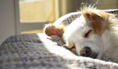 Consejos para elegir una cama adecuada para tu perro