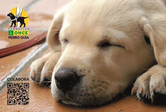Purina renueva su compromiso con la Fundación ONCE del Perro Guía y celebra su 10º aniversario juntos