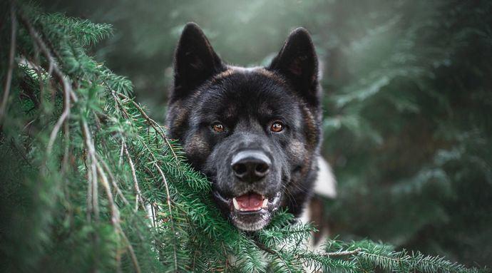 Cómo evitar los ladridos del perro