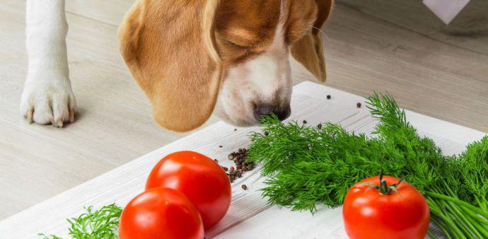 Mitos y verdades de la alimentación grain free para mascotas