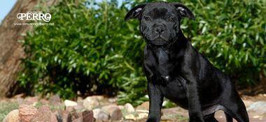 Educación canina en positivo: Marcas de Ausencia de Refuerzo (MAR)
