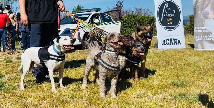 Vuelven los perros y con ellos, la ilusión, a un centro ocupacional para retomar las actividades paralizadas a causa del Covid-19