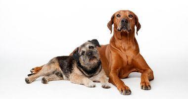 Los expertos consideran que es necesario tomar medidas todo el año para garantizar la protección de las mascotas