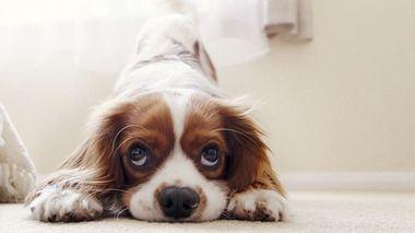 Cómo enseñar al perro a hacer sus necesidades en un solo lugar