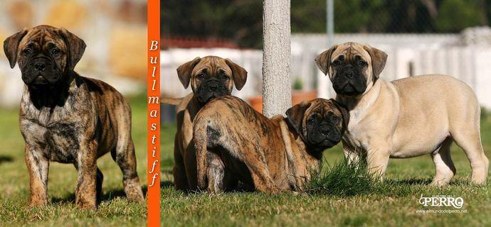 Fotos Alberto Nevado - El Mundo del Perro.