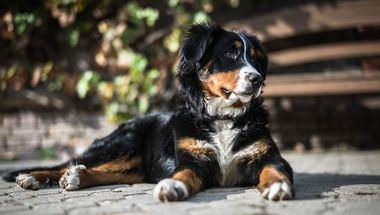 APDDA respalda la 'descosificación' de los animales en el Código Civil