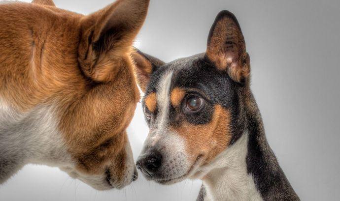 5 conductas socialmente aceptadas en perros, pero desagradables para el propietario