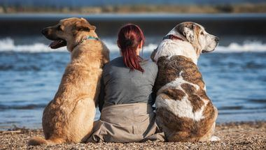 """Expertos europeos buscan soluciones """"One Health"""" para la protección de las mascotas y sus familias contra el aumento de las temperaturas estacionales"""