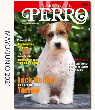 Foto portada: Ejemplar de propiedad del Afijo OnceTartessos Jack Russell Terrier.