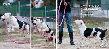 Dog Trick o Habilidades Caninas