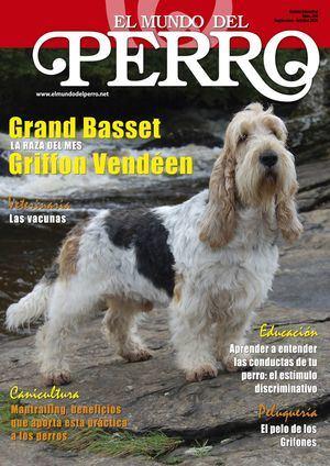 Grand Basset Griffon Vendéen