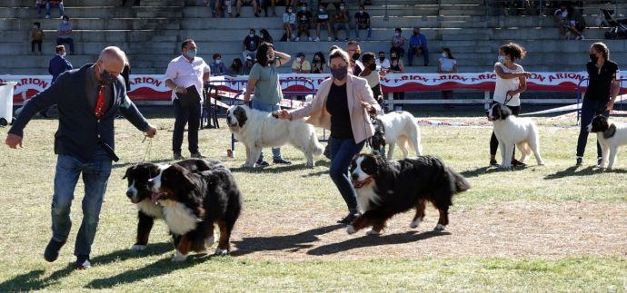 Los concursos de belleza canina repiten en la Feira Internacional de Galicia ABANCA del 10 al 11 de julio y suman la Xuntanza del Mastín del Pirineo