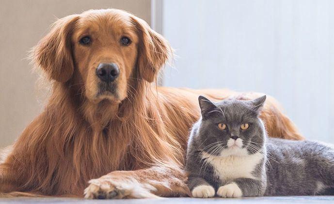 Cuando la piel de nuestras mascotas necesita el mismo mimo que la nuestra, la solución está en los aceites ozonizados