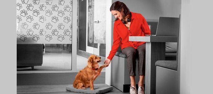 5 razones para llevar a tu perro al trabajo