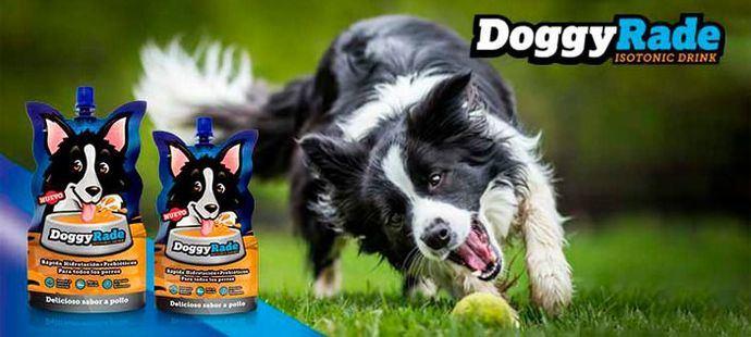 Nuevas bebidas isotónicas de rehidratación para perros