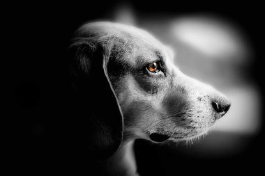 Las protectoras españolas recogieron 162.000 perros en 2020, un 11,5% menos que el año anterior