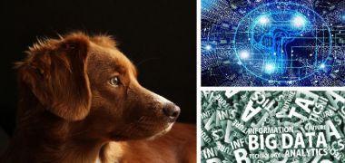 El internet de las cosas, el big data y la inteligencia artificial para contribuir a garantizar la salud animal
