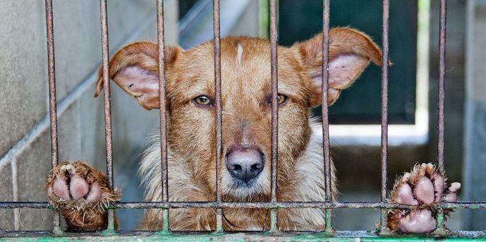 Solo el 28% de perros y el 4% de los gatos recogidos por protectoras en 2020 llevaba microchip