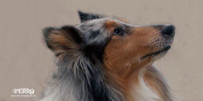 Foto El Mundo del Perro.