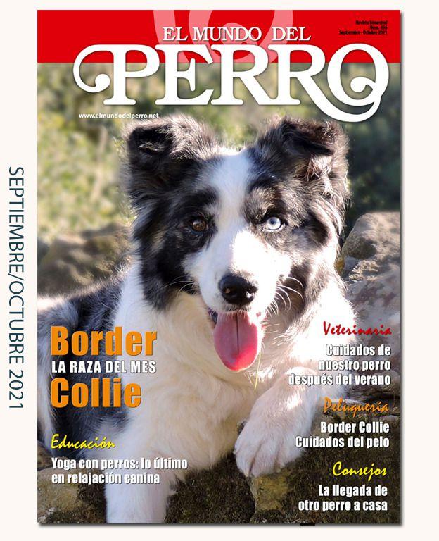 Foto portada: «CH. Gib. Sol de Cannatura  (Summer)». Afijo Endeland's  Border Collies.