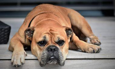 ¿Puede sufrir osteoporosis mi mascota?
