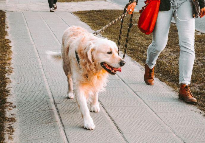 Consejos para que tu perro disfrute al máximo de los paseos