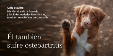 Los animales de compañía también sufren osteoartritis