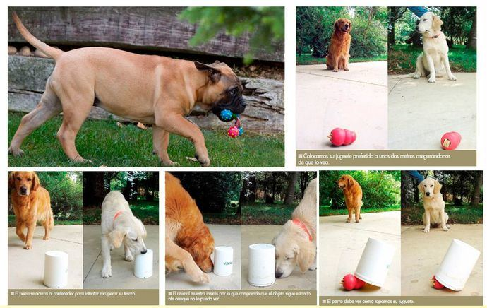 Juguetes para rellenar para perros. Perfecto Entretenimiento