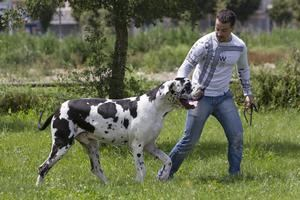 Tengamos o no un perro, este animal ha pasado a formar parte de nuestras vidas.