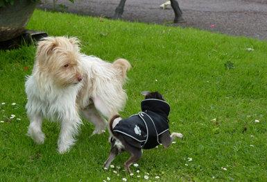 El saludo entre perros
