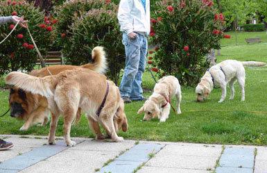 Actividades con cachorros en la ciudad